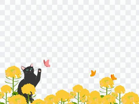 強姦花田和貓