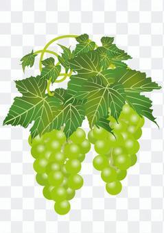 美味的葡萄17