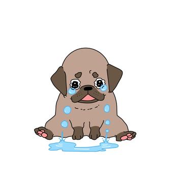 すする泣くパグ