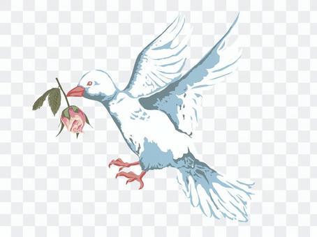バラをくわえた白い鳩