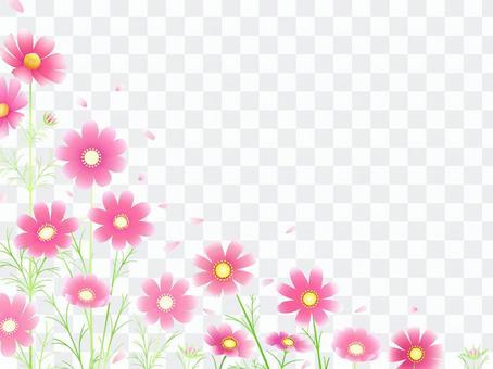 秋向け・コスモスのフレーム9ピンク