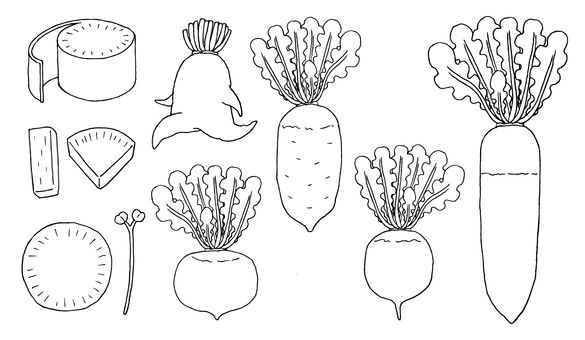 蘿蔔插圖(畫線)