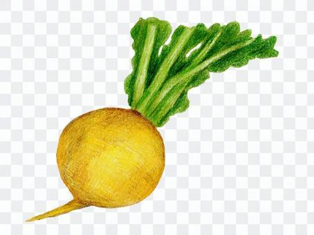ターニップ(イタリア野菜のカブ)