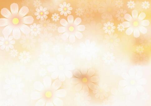꽃 무늬 코스모스 24