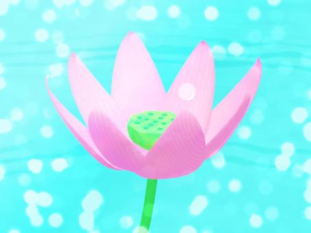 明るく輝く蓮の花