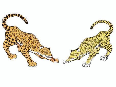 Big Cats 3
