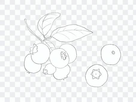 藍莓素描01
