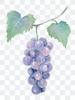 用透明水彩畫與葡萄葉子