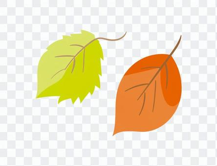 낙엽 · 낙엽