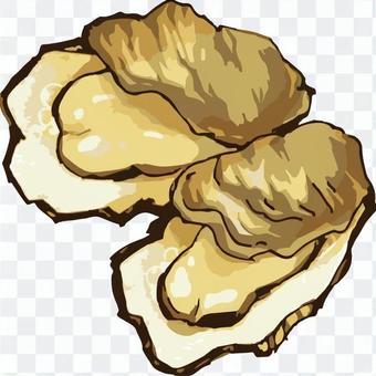 牡蠣(手繪)