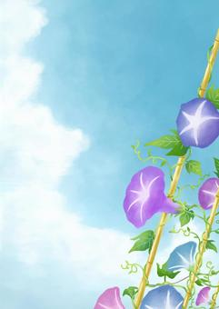 Morning glory and summer sky