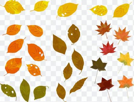 낙엽 세트