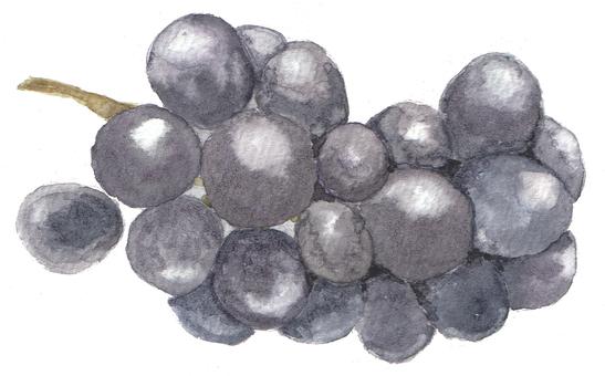 模擬水彩串黑葡萄