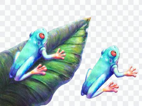蛙とオーロラ背景なし