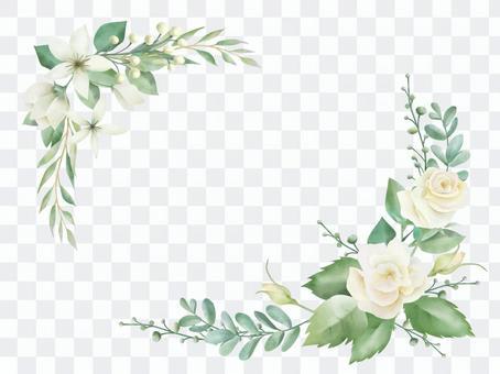 白花植物框架