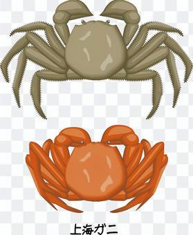上海蟹蟹甲殼類捕撈蟹進口
