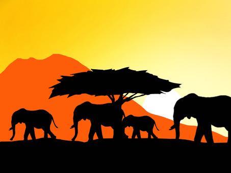 非洲大象和熱帶稀樹草原日落