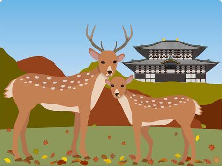 秋天與奈良公園的鹿東大寺