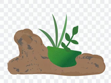 苔蘚製成的浮木