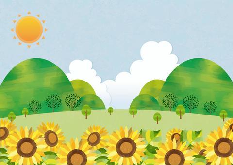 仲夏風光和向日葵群