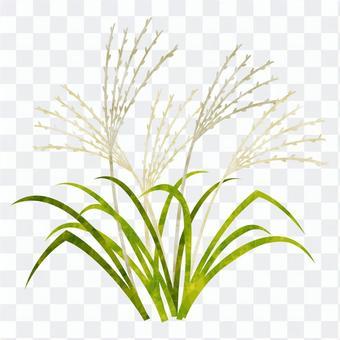 Autumn seven herbs / rice