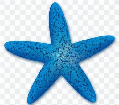Starfish - 04