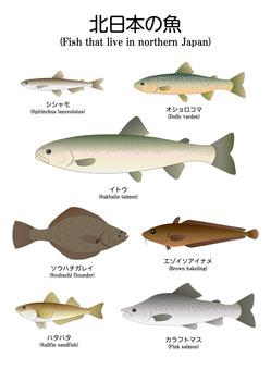 Northern Japan fish