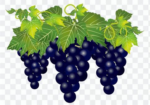 美味的葡萄6