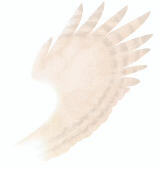 깃털 (흰색 배경)