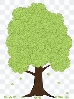 Street tree ⑤