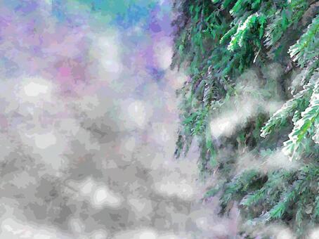 冬天的樅樹