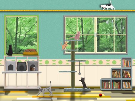 異國風情室內7隻貓房