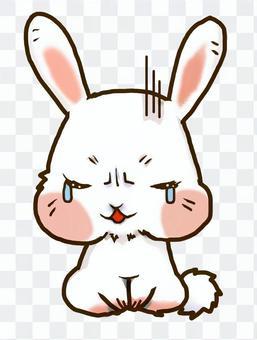 傷心的兔子