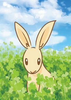 綠色和兔子