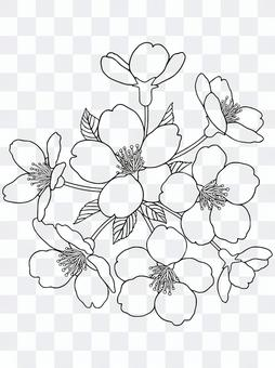 """著色""""櫻花一枝""""(線條顏色:黑色)"""