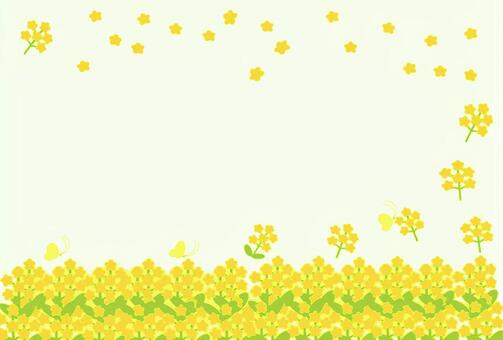Rape blossoms ①