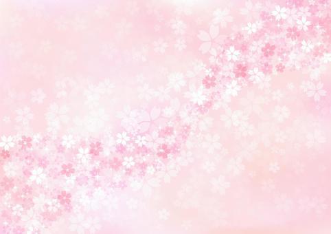 櫻花422