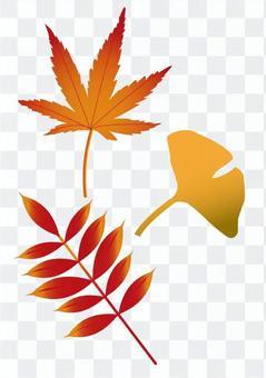 秋天的落葉和銀杏的插圖