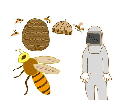Bee & protective clothing