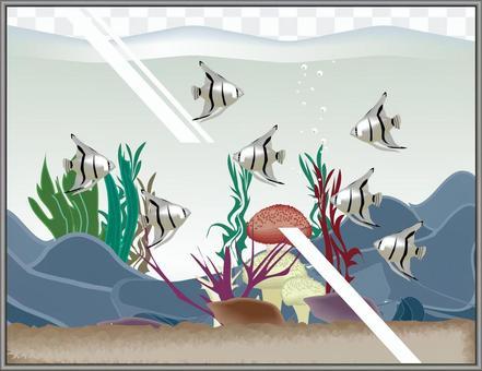 銀天使水族館魚水族館