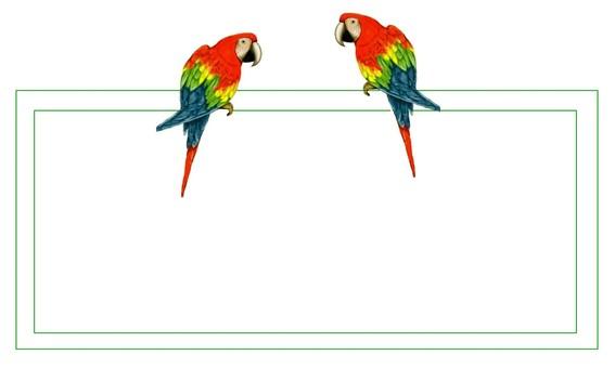 Bird parrot frame