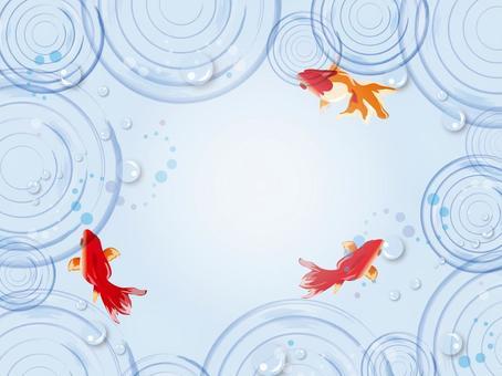 夏季背景水rest和金魚建成