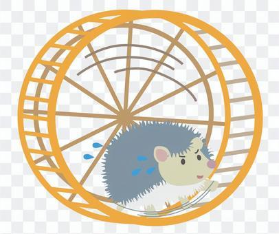 Running hedgehog