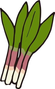 산채 (수도자 마늘)