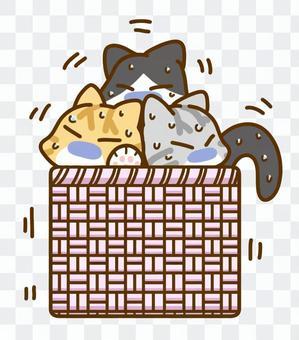 AmiAmi籃子貓