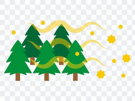 雪松花粉散射森林