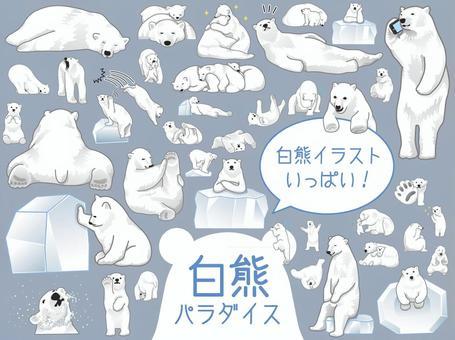 白熊北極熊插圖