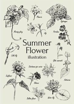 Summer flower illustration