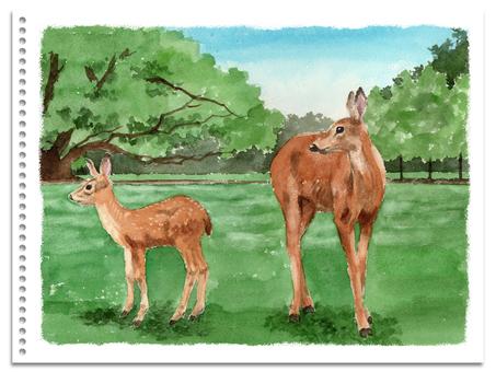 Analog watercolor Deer parent and child in Nara Park