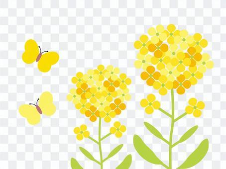 強姦花和蝴蝶